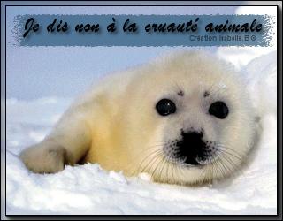 Je dis non à la cruauté animale !